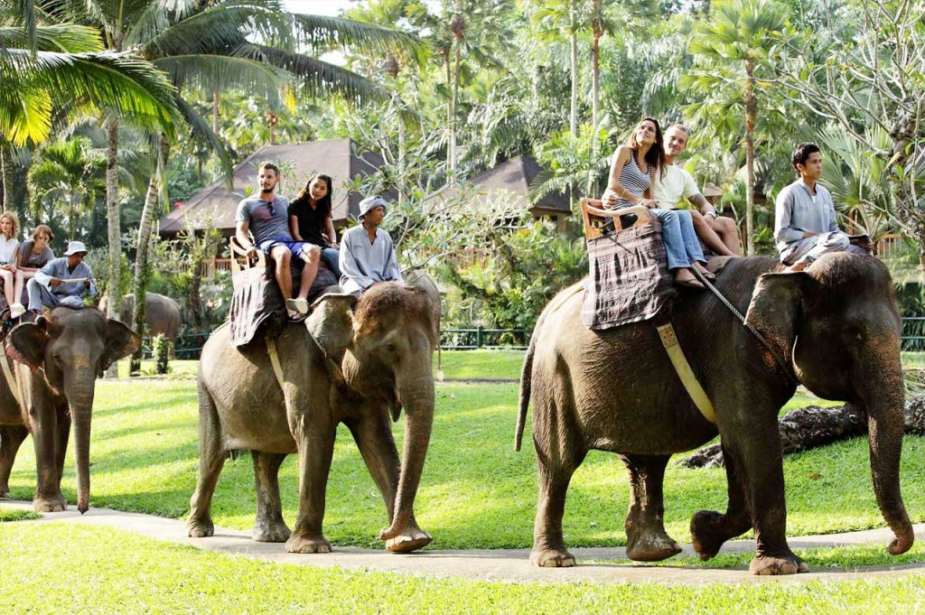 elephant-riding-adi-tour-guide