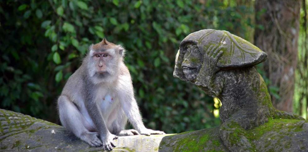 monkey-forest-ubud-adi-tour-guide