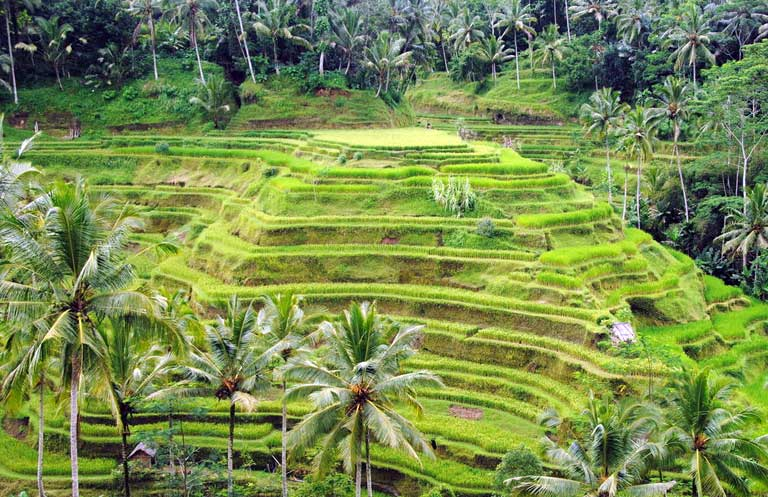 tegallalang-rice-terrace-adi-tour-guide
